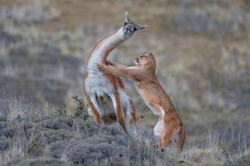 Призеры европейского конкурса фотографий дикой природы 2019