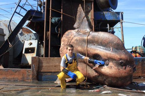 Мурманский моряк выкладывает фото самых странных рыб, пойманных его траулером