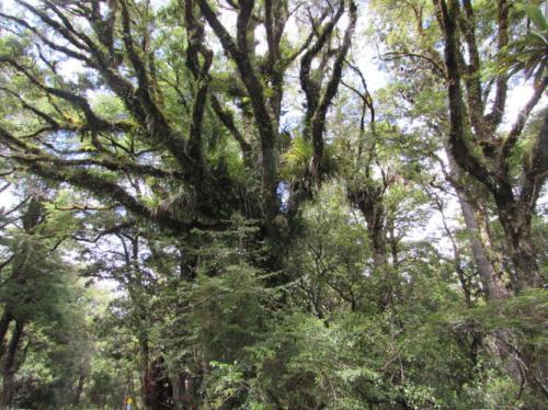 Необычные деревья, которые создала эволюция