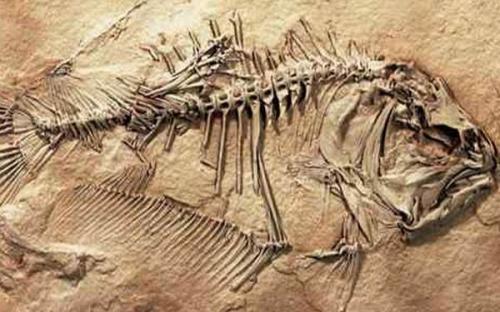Странные животные, открытые в музеях