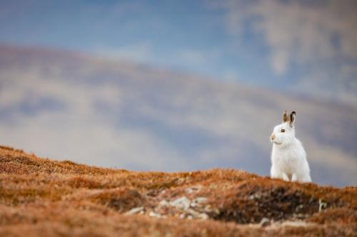 Победители конкурса фотографий Mammal Photographer 2020