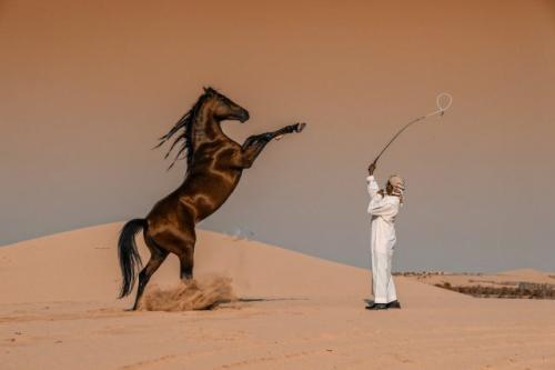Победители фотоконкурса Sony World Photography Awards