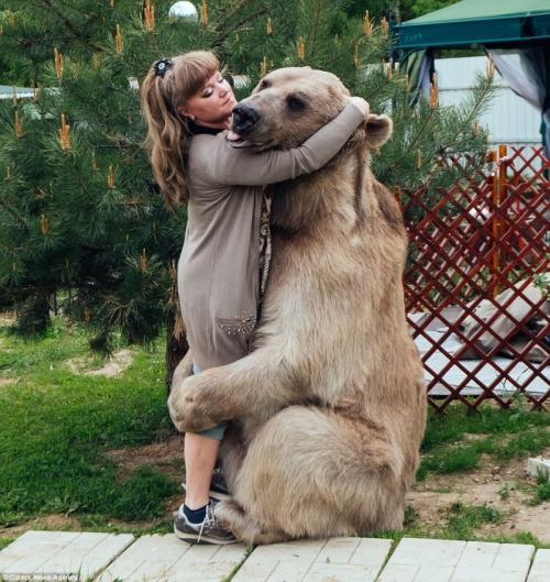300-килограммовый медведь стал домашним питомцем