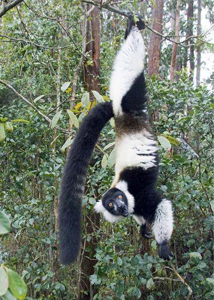 Забавные фотографии животных Джоанн Уильямс