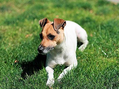 Топ-10 самых агрессивных пород собак