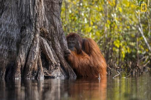 Победители конкурса фотографий дикой природы National Geographic