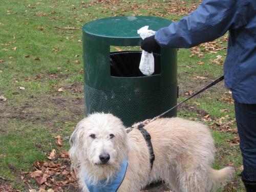 «Уберем за вашей собакой» Если вам лень убрать двор или улицу за собственной собакой, компания DoodyCalls из Вирджинии сделает это за вас. Между прочим, они убирают собачьи какашки с 2000 года.