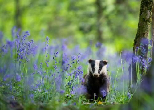 Победители конкурса фотографии дикой природы