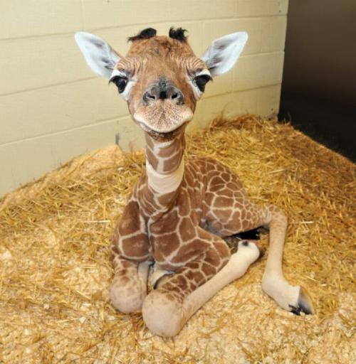 Самые милые фотографии детенышей животных со всего интернета
