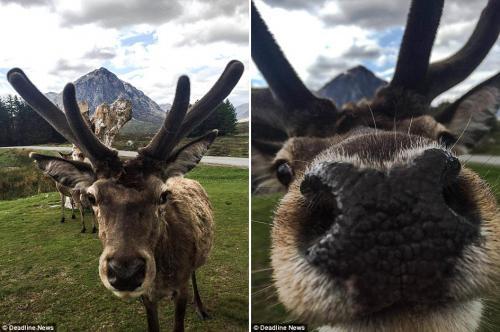 Забавные фото животных, которые неожиданно вклинились в селфи