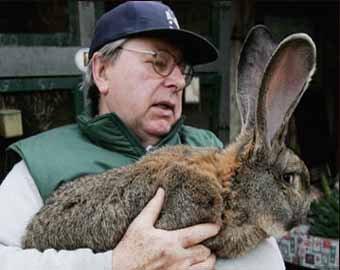 Самый большой в мире кролик продолжает расти