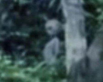 В Бразилии случайно засняли инопланетян?