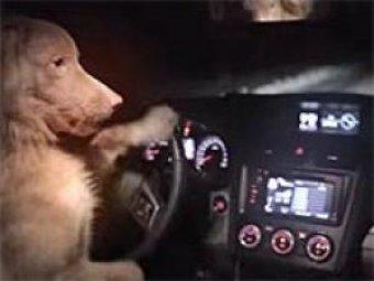 Subaru может угнать даже собака