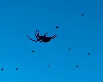 В Бразилии засняли на видео «дождь из пауков»