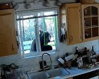 Медвежата, решившие перекусить в чужом доме, попали на видео