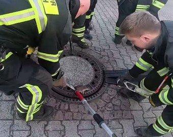 Спасатели помогли толстой крысе, застрявшей в люке