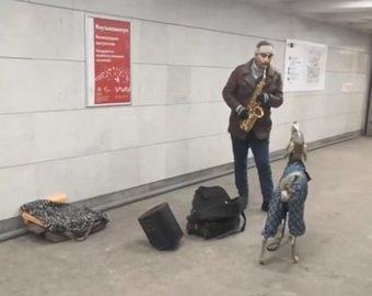 Собака исполнила в метро хит Джеймса Брауна