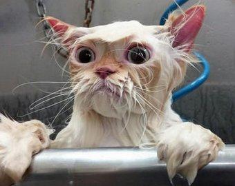 В Петербурге оставленные без присмотра коты затопили несколько квартир