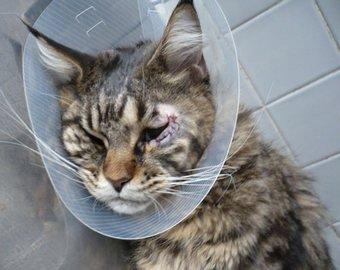 Хозяйка вызвала шквал критики, отправив своего «уродливого» кота на пластику