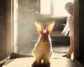 Гигантский кролик почти перерос хозяйку