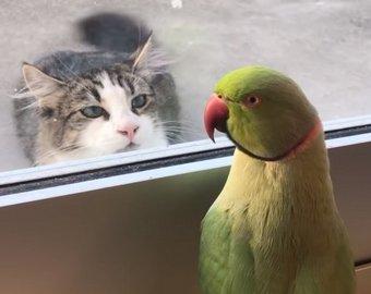 Попугай сыграл с котом в прятки и стал интернет-звездой