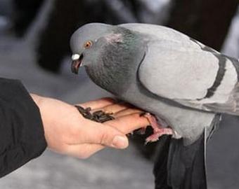Водитель маршрутки покормил голубя с руки во время движения