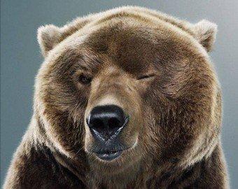 Медведица прославилась в соцсетях страстными танцами