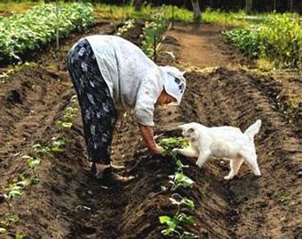 Кот-огородник набирает популярность в Сети