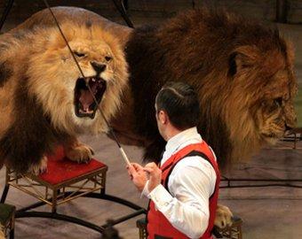 Дрессировщик продолжил выступление после нападения льва