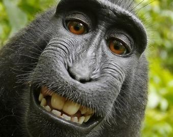 Научившаяся пользоваться Instagram обезьяна стала интернет-звездой