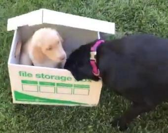 Пёс получил в подарок друга и стал интернет-звездой