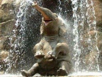 Тайский слонёнок стал звездой соцсетей