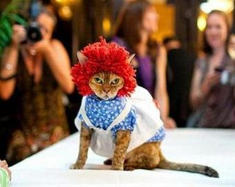 Бездомная кошка прошлась по подиуму на показе Dior