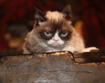 «Самая сердитая» в мире кошка умерла в США