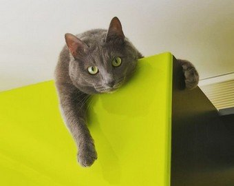 Кот побоялся прыгнуть с высоты и нашёл хитрый способ спуститься
