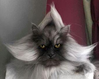 """Кошка """"с причёской"""" стала интернет-звездой"""