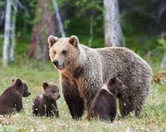 Старики прогнали медведей кулаками и битой