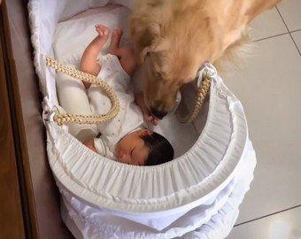 Реакция собаки на появление младенца в доме растрогала интернет-пользователей