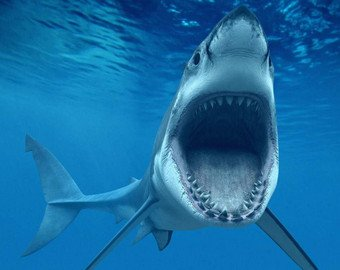 Дайвер ввел в транс акулу и попал на видео