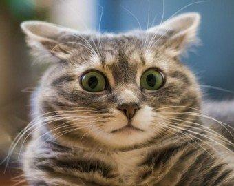 Кошка увидела себя в увеличительном зеркале и стала мемом