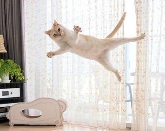 Кошка из Японии покорила пользователей Сети танцами