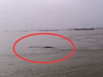 18-метрового «водяного монстра» сняли на видео в Китае