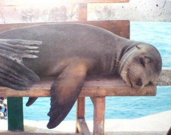 Видео со спящим в воде тюленем взорвало Сеть