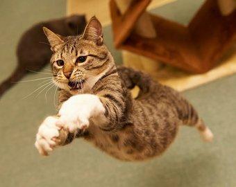 Неудачная попытка кота прыгнуть на стол прославила его на весь мир