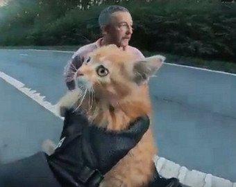 Байкер спас выбежавшего на дорогу котенка