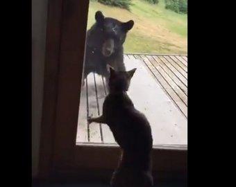 Кот спас дом от медведя