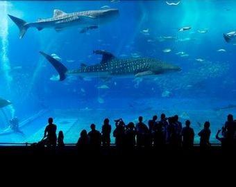 Рифовая акула проглотила другую акулу в зоопарке Антверпена