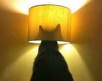Видео с котом-мотыльком стало вирусным
