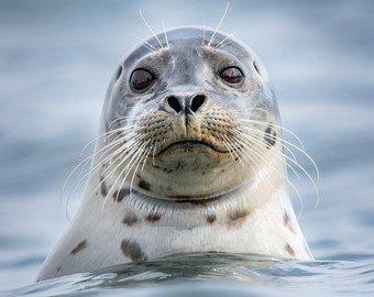 Мужчина спас тюленя и едва не лишился гениталий