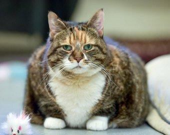 В сети появилась петиция с просьбой не взвешивать кошек и собак перед посадкой в самолет